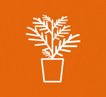 Pflanzen_Front